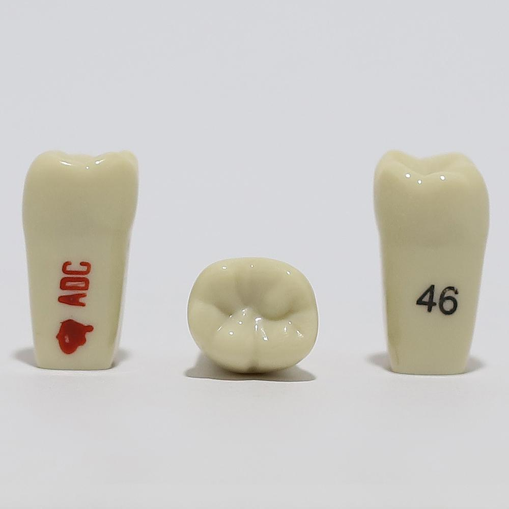 ADC Tooth 46 for ADC Model