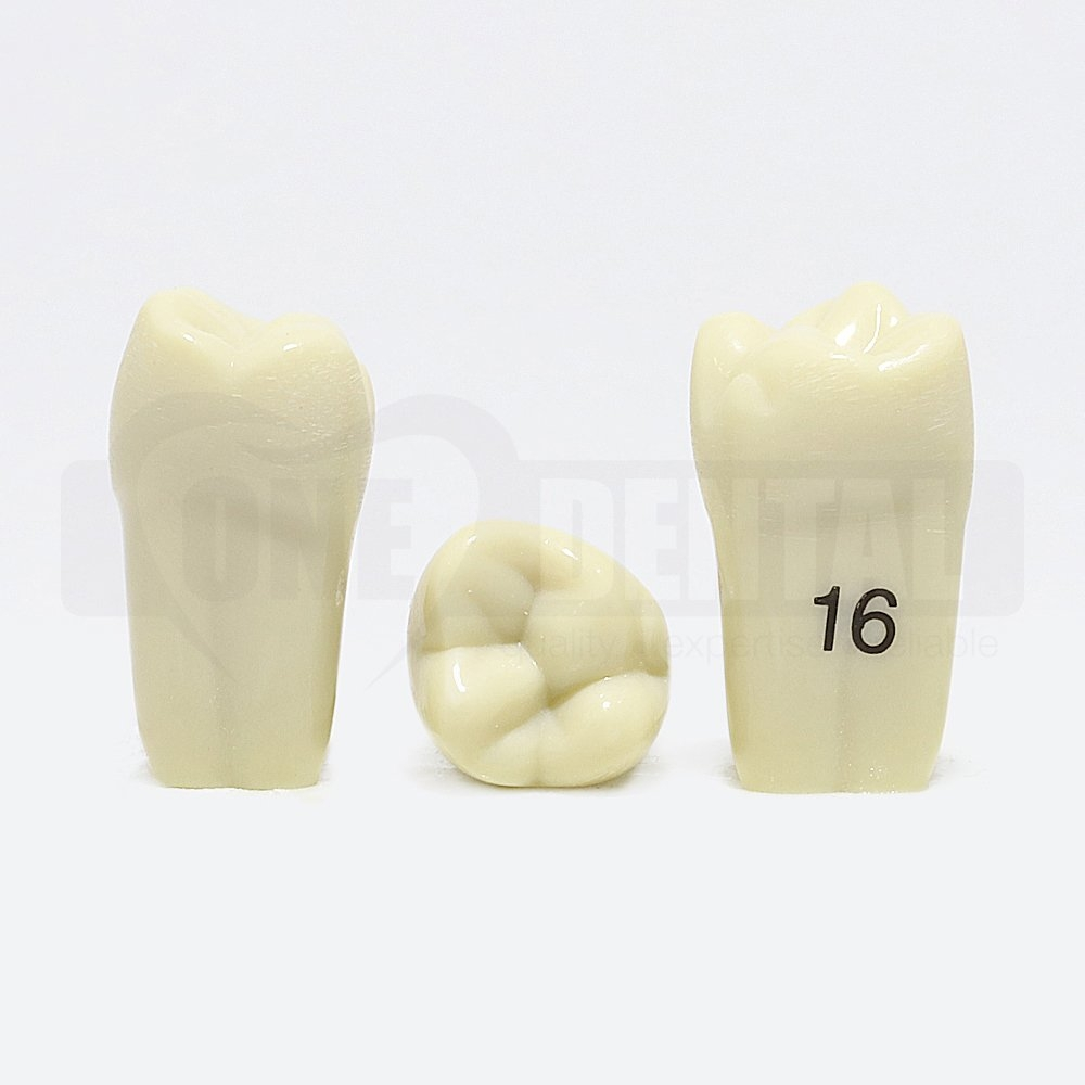 Tooth 16 for Paedo Model 1971