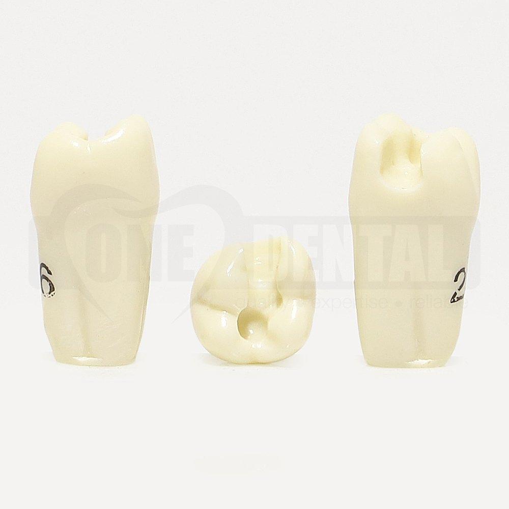 Prep Tooth 26MO GW