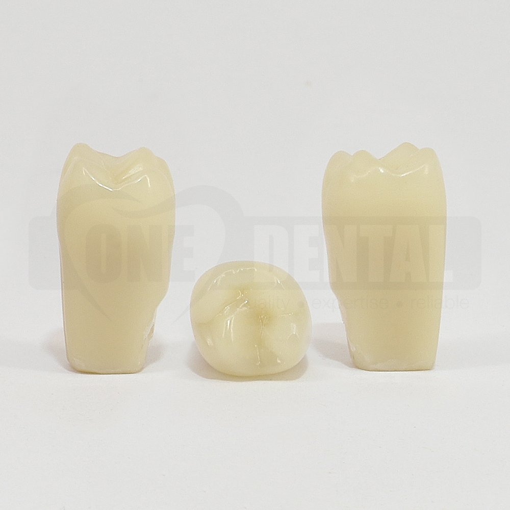 Aesthetic Tooth 16 for 2008 Adult Model