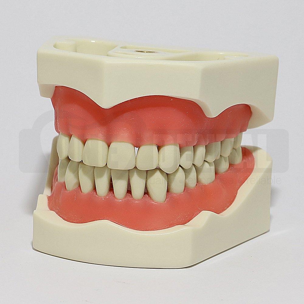 2008 Model 32 Teeth Soft Gingivae Bushing Thread