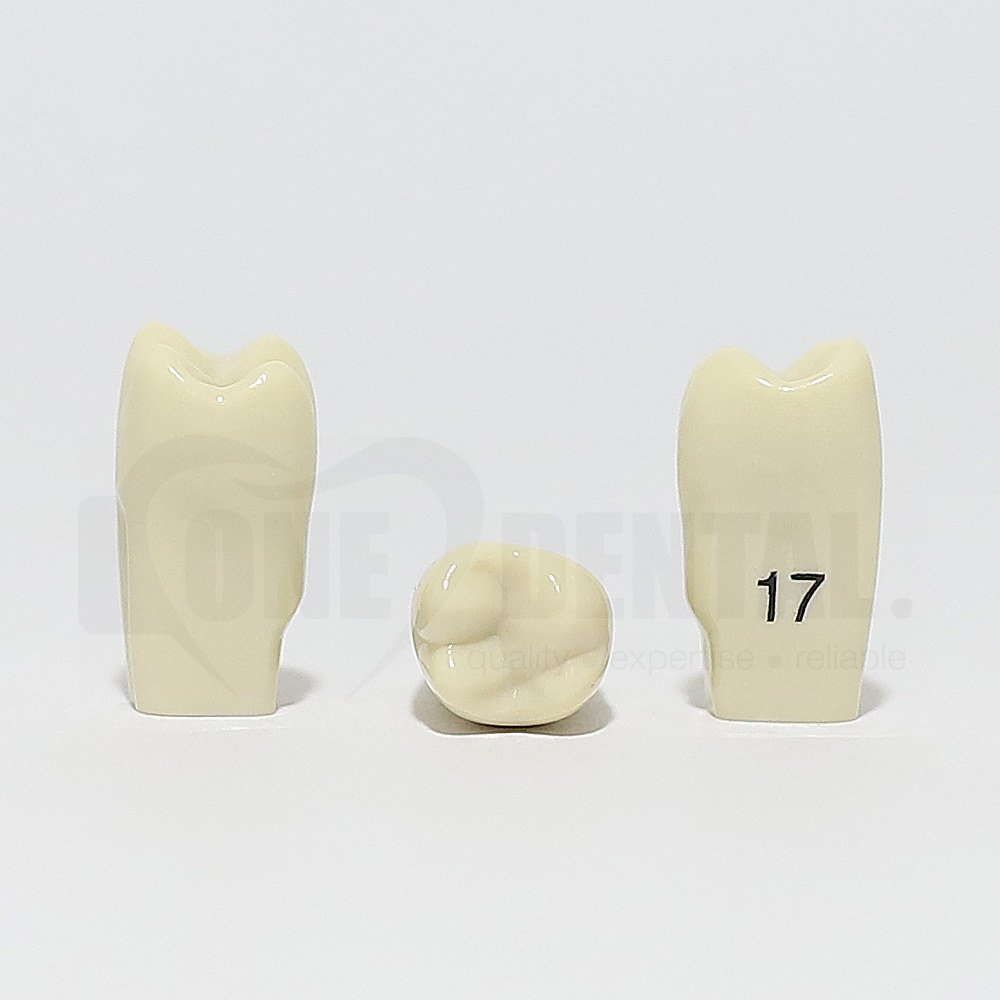 Tooth 17 for 2010 Adult Model