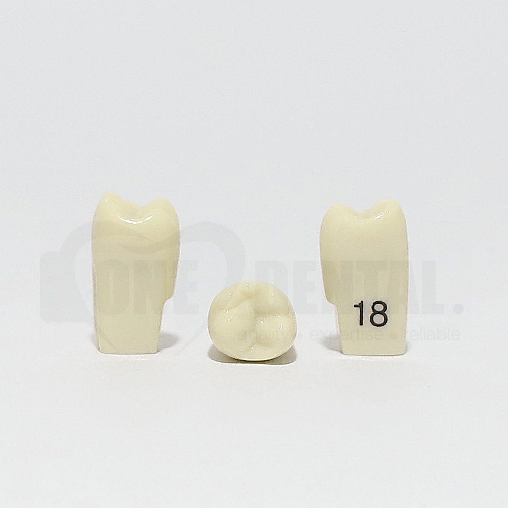 Tooth 18 for 2010 Adult Model