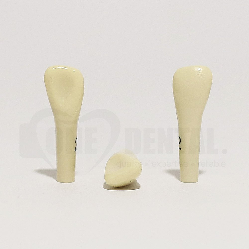 Tooth 22 for 2010 Adult Model