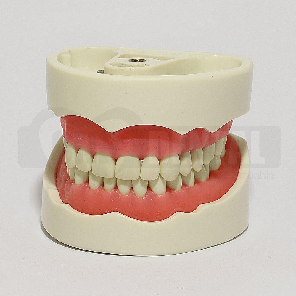 2010 Model 32 Teeth Soft Gingivae Bushing Thread