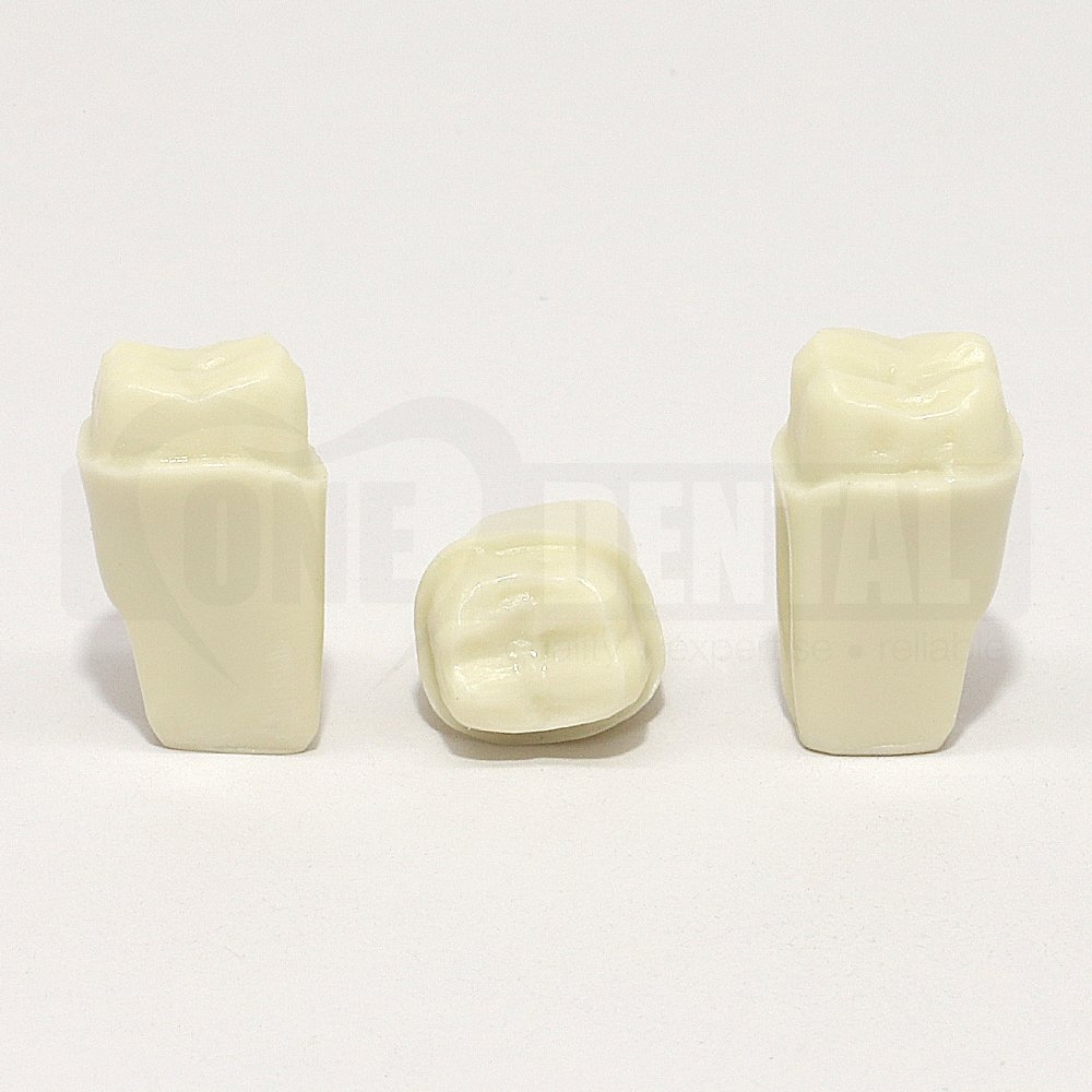 Prep Tooth 16 Full Crown for 2010 Adult Model