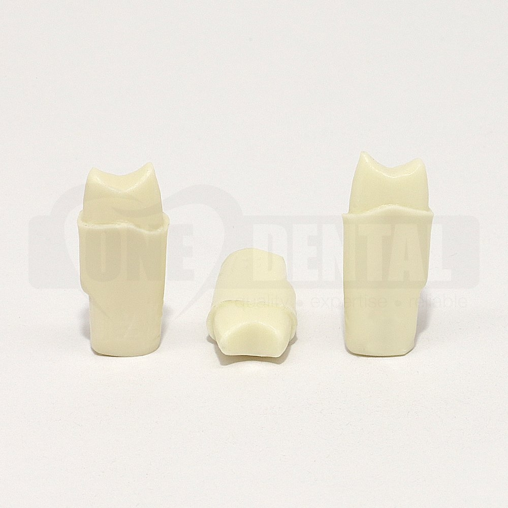 Prep Tooth 24 Full Crown for 2010 Adult Model