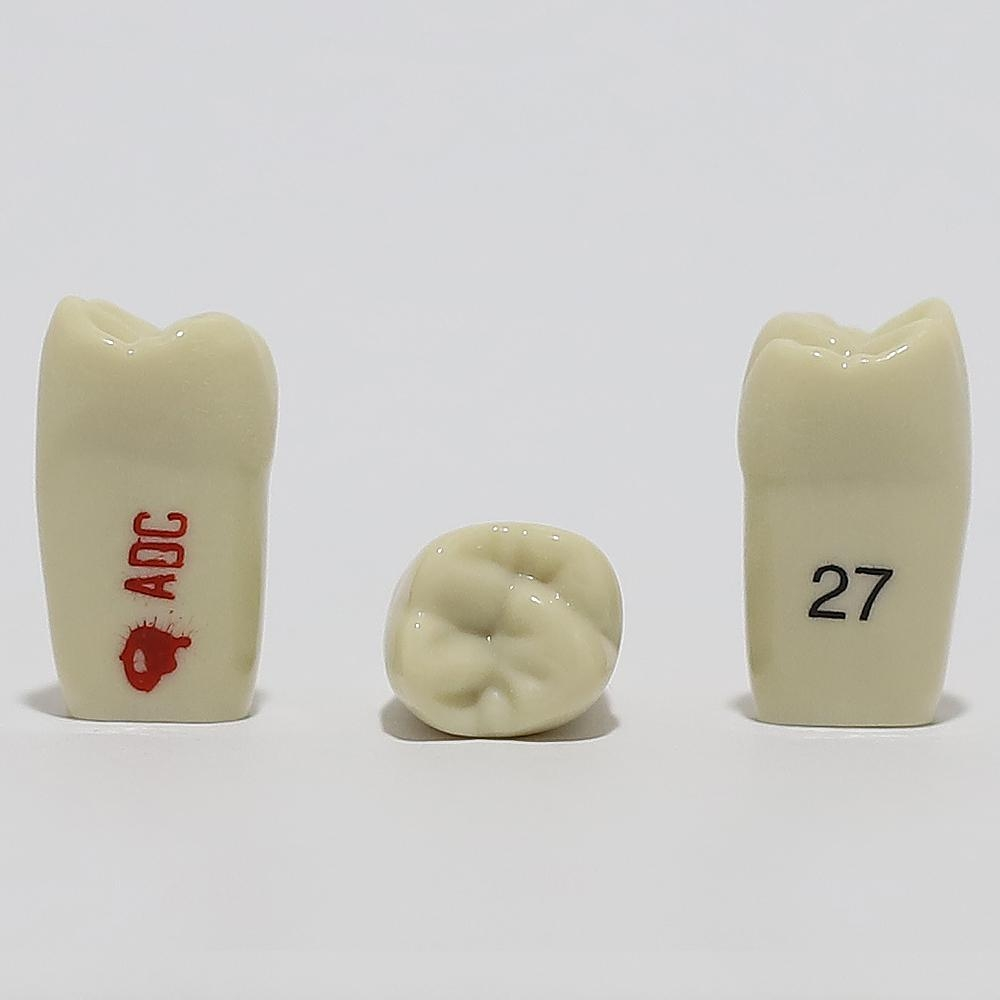 ADC Tooth 27 for ADC Model