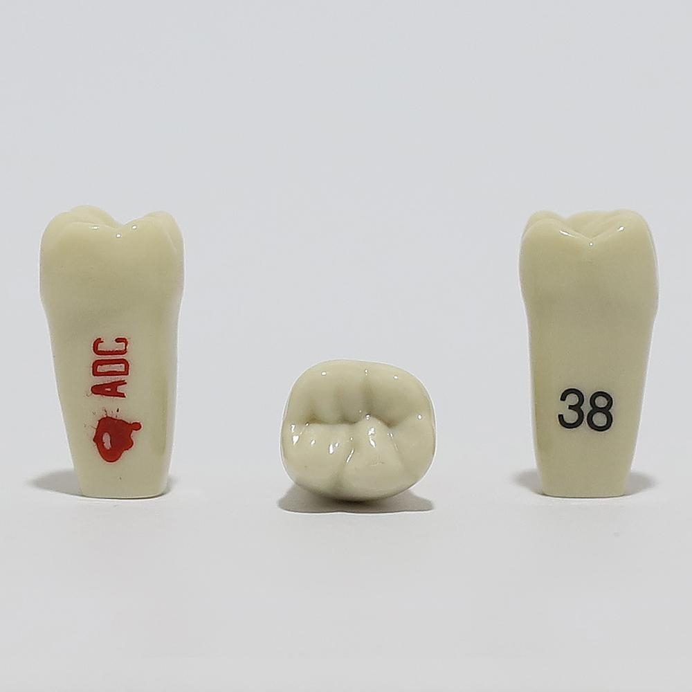 ADC Tooth 38 for ADC Model