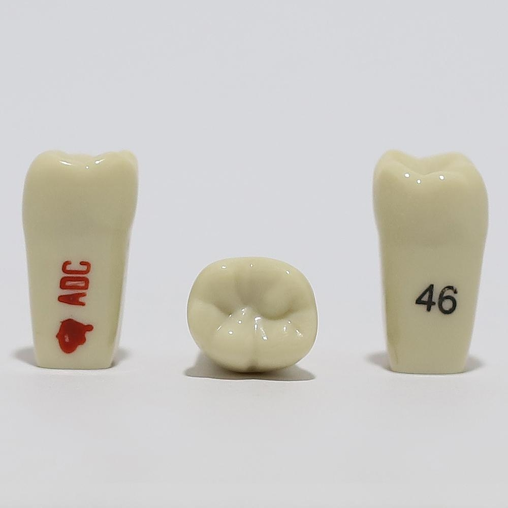 ADC Tooth 46 for ADC Model - Click for more info