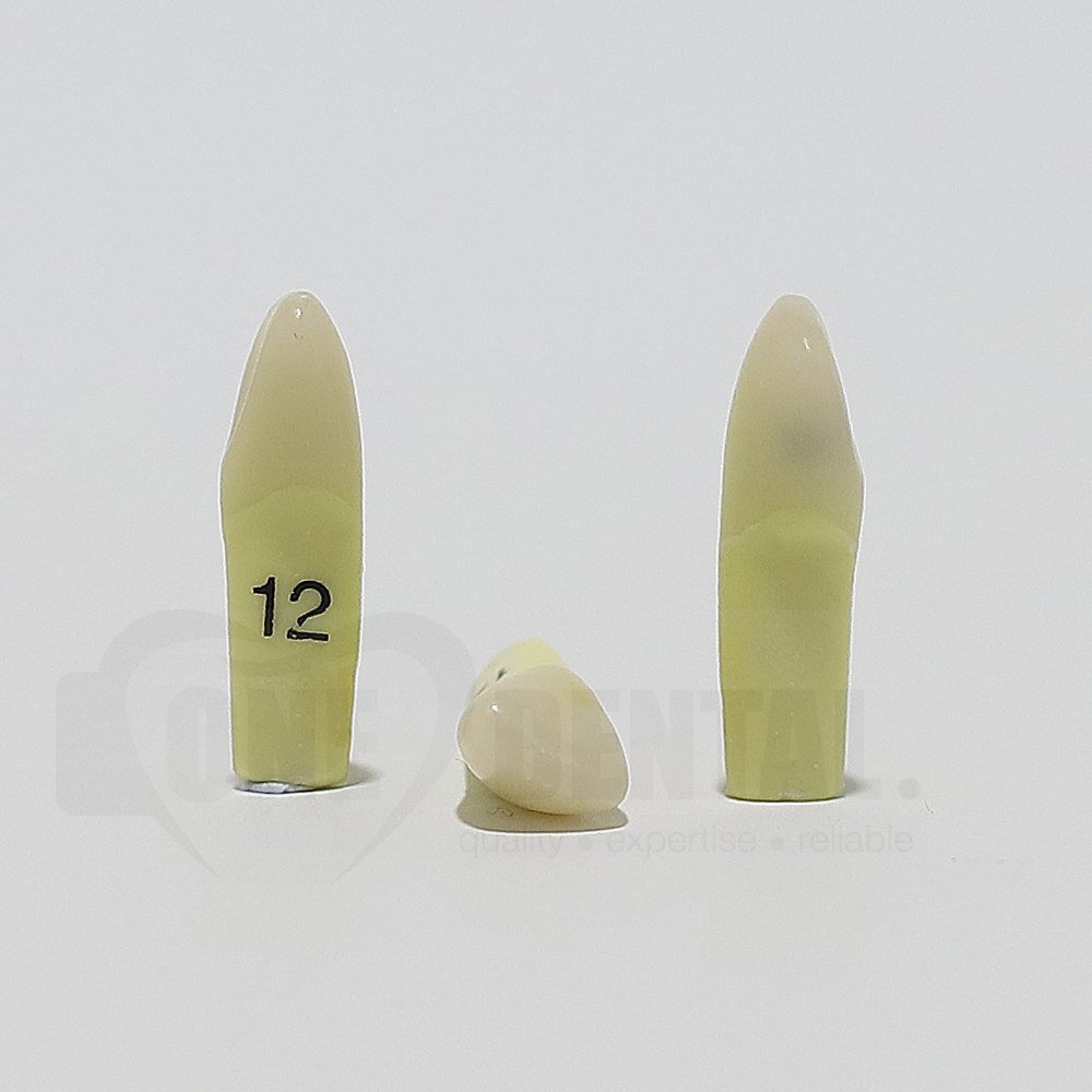 Caries Tooth 12D for ADC Model