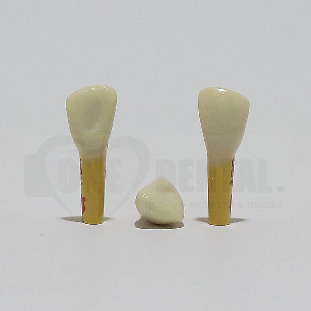 ADC Dentine Enamel 12 for ADC Model