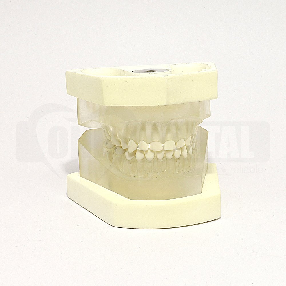 Paediatric Clear Extraction Model MQD With Removable Anatomical Teeth