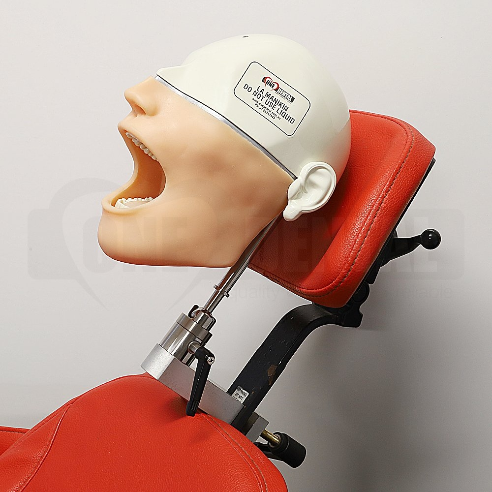 Local Anaesthesia Manikin with Head Rest Mount